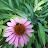 Lisa Slack avatar image