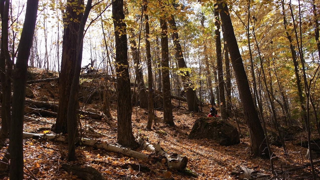 沿路都這樣,沒有人跡的荒山野林 XD