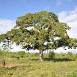 """Photographies de Retour des Indes: Galerie """"Parc national d'Udawalawe"""""""