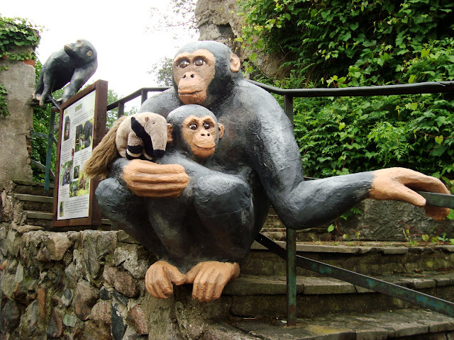 Któż, jak nie on, mógłby mieć zdęcie z szympansem?