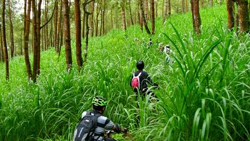 Saking hijaunya, track yang biasa kami lewati pun hilang ditumbuhi oleh vegetasi sejenis Rumput Gajah.