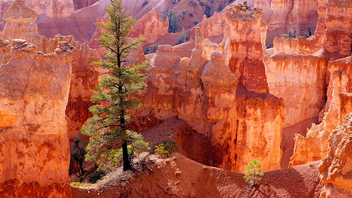Lone Tree, Bryce Canyon, Utah.jpg