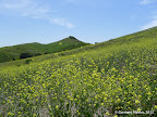 Hill top in Hiddenbrooke amid wild flowers
