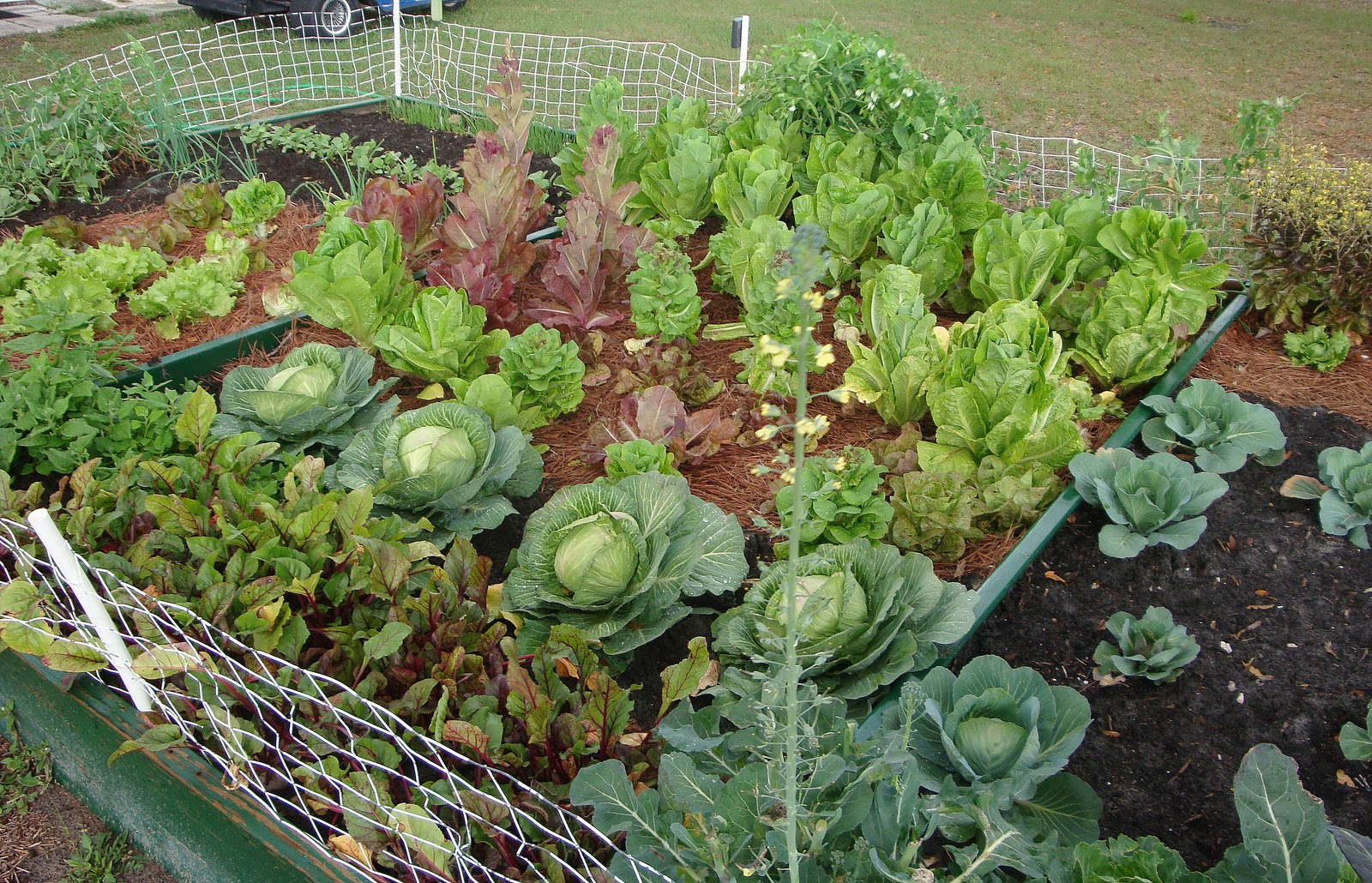 The garden for eatin for practical vegetable gardening