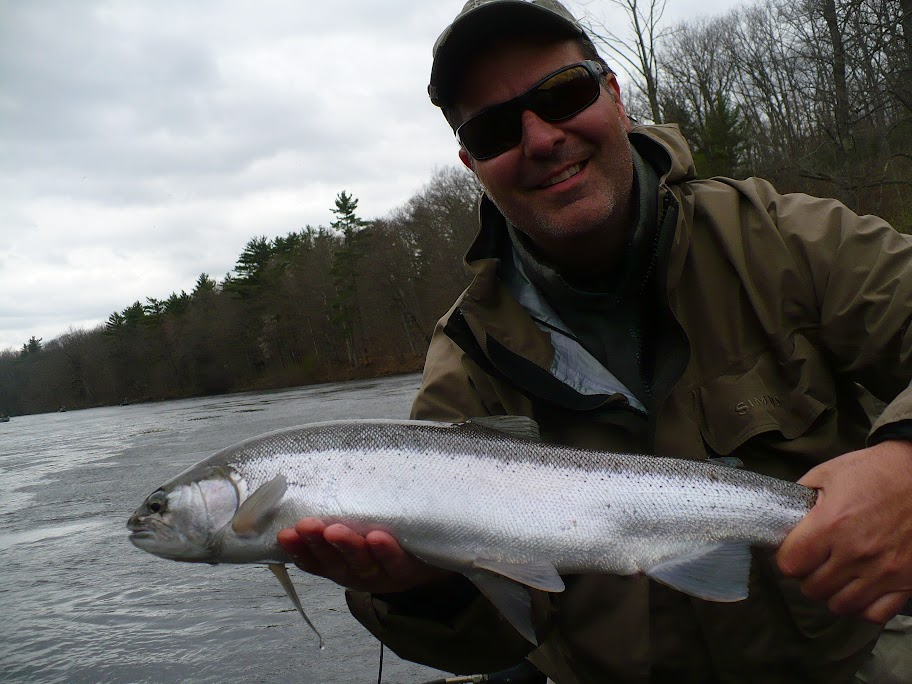 chrome steelhead on the muskegone river