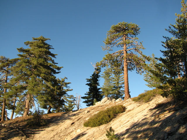 trees high on the crest of the ridge