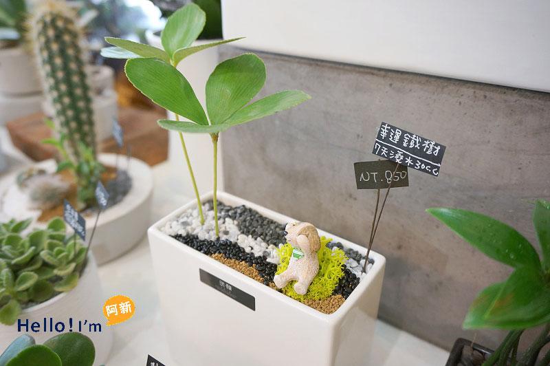 台南植栽店,日光夏蘭-9