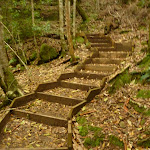 Timber steps close to Moss Wall near the Boarding House Dam in the Watagans (322688)