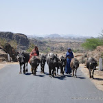 Sur la route, Rajasthan