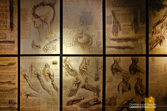 Anatomy Gallery at The Mind Museum's Da Vinci The Genius Exhibit