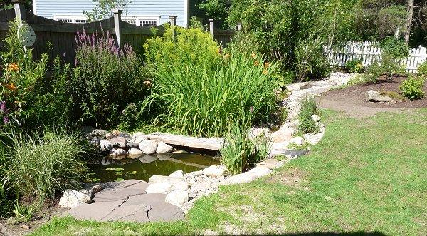 pond and stream