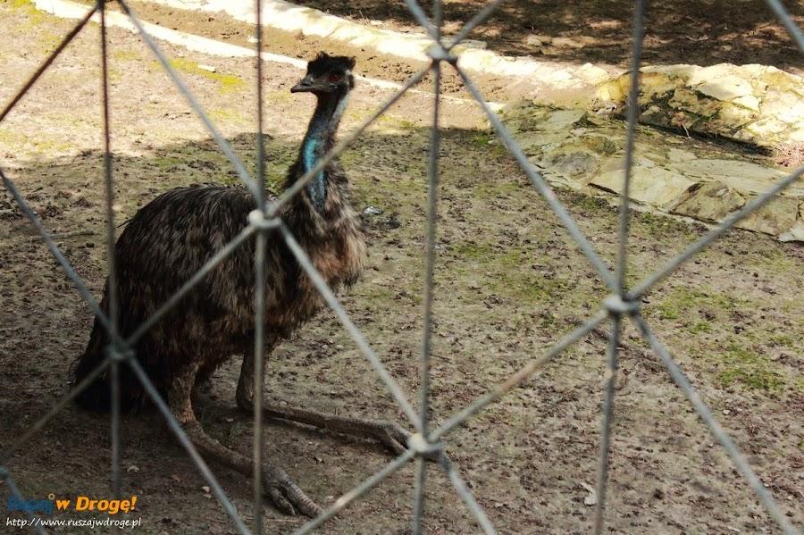Sanktuarium Maryjne Kałków Godów - siedzący struś w mini zoo