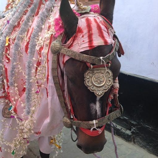 Syeda Zaidi