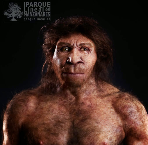 H. heidelbergensis, humanos que precedieron a los neandertales y que guardan muchas similitudes con ellos. Atapuerca está arrojando mucha información sobre ellos. Museo de la Evolución Humana, Burgos.