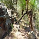 Trail in the Awaba range (358529)