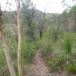 Bungaroo Track (122461)
