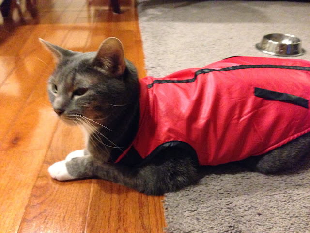 kitty vest