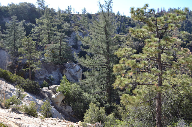 short, yellow cliffs through the trees