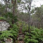 Ferns beside Birwanna Track (118114)
