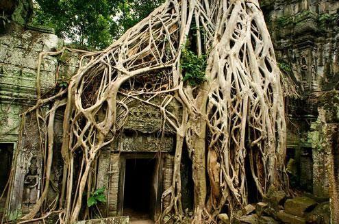 tour campuchia du lich ta prohm tct Tour du lịch Campuchia: Sài Gòn   Ta Prohm   Phnompenh