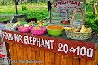 You can feed the elephants even if you don't ride them