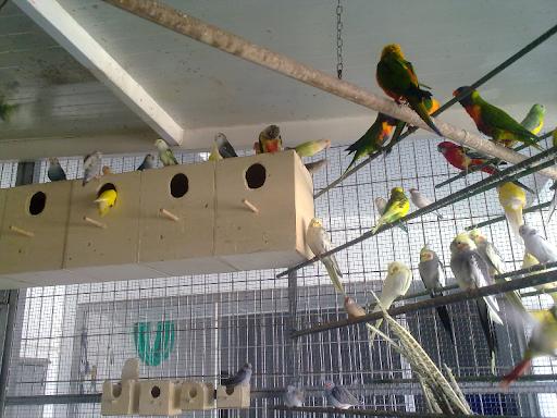 ADOPTO todo tipo de PÁJAROS,  aves, y