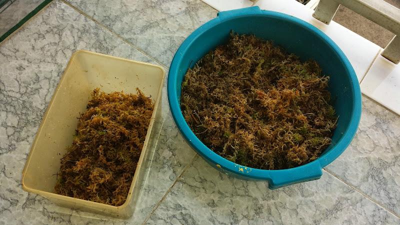 D nde comprar musgo sphagnum en verdecora for Verdecora madrid