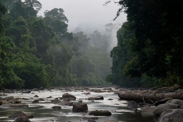 Hutan-Simpan-Imbak-Canyon-Conservation-Area