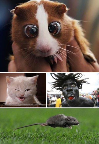 Смешные фотографии
