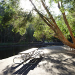 Picnic table by pond at Carnley Ave Reserve (399307)