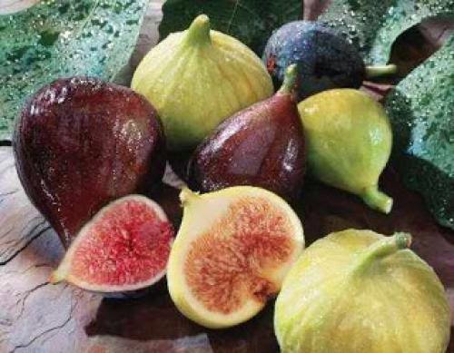 Folk Medicine Cures Figs