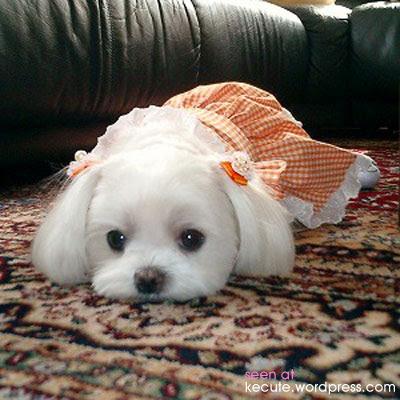 狗狗的時尚髮型