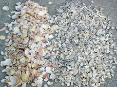 conchas recicladas