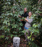 Lucho invited us over to pick some coffee beans...