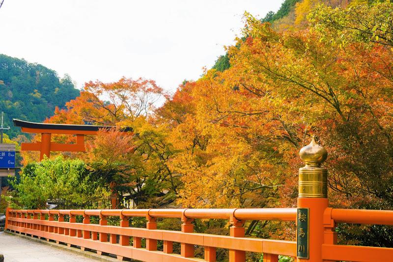 京都 貴船口駅 紅葉 写真2