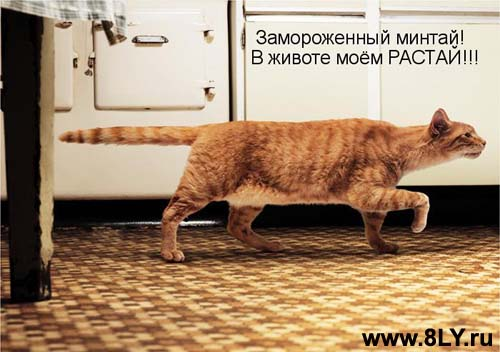 ng+copy - Кошки ))