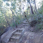 Steps in rock on Two Creeks Track (130225)