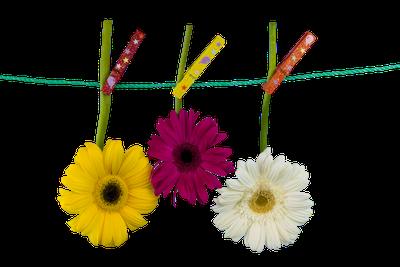 flores no varal