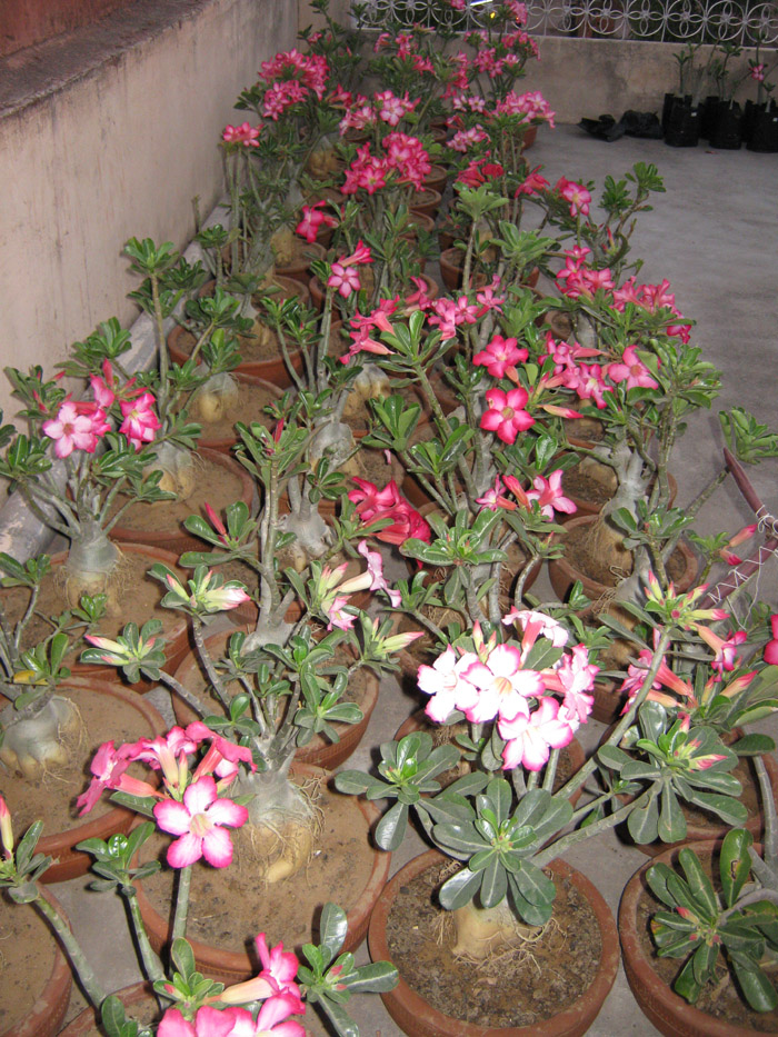 Flower Nursery In India - Classycloud co