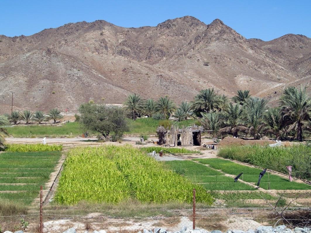Wadi farm