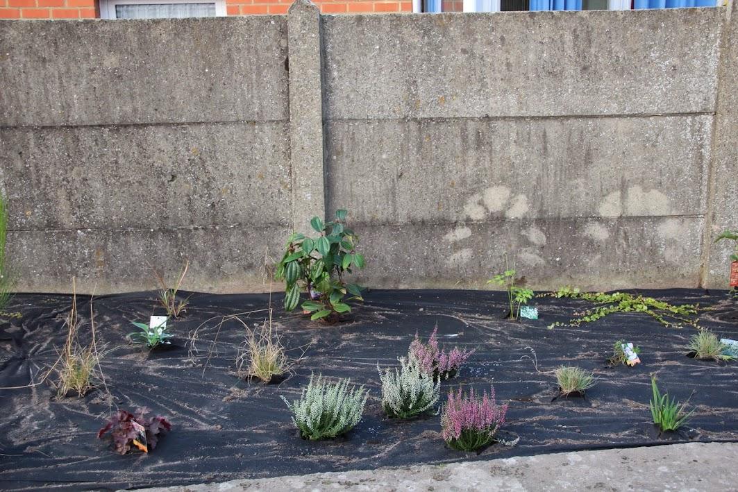 Nouvelle maison dit aussi nouveau jardin... IMG_9529