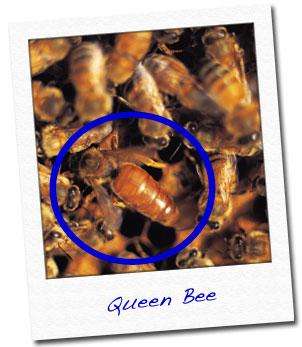 Παρθένα Βασίλισσα video