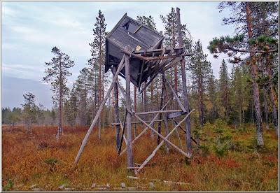 Älgtorn vid Tjägarselet