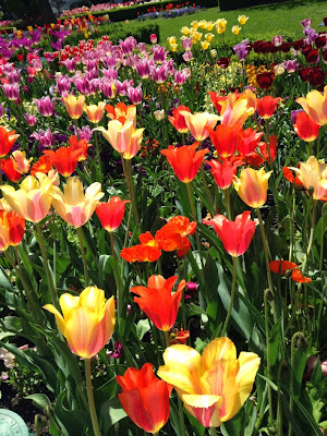 Temple square tulips