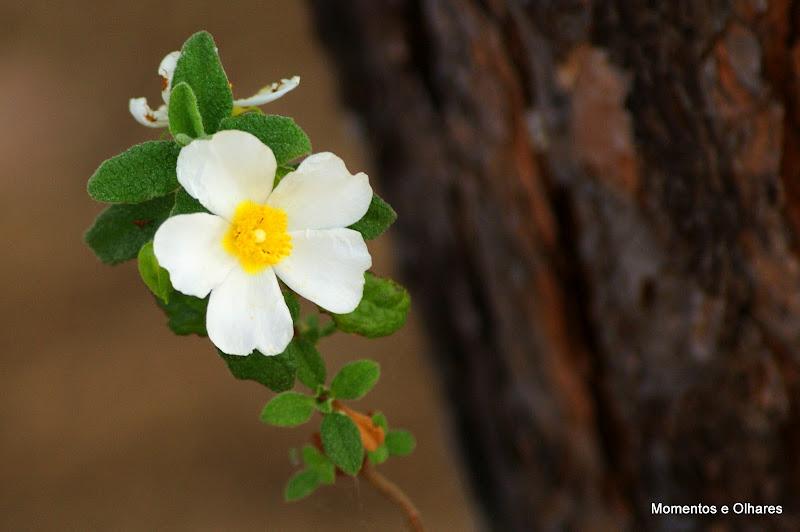 Detalhes da primavera, Flores silvestres