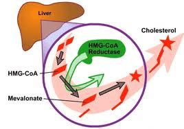 Phát hiện thuốc giảm cholesterol hiệu quả