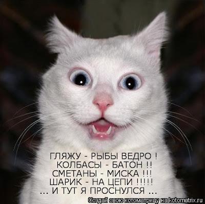 Для тех кто сомневается что кошки понимают наши слова...