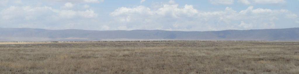 Ngorongoro'da Krater duvarı ve sürüler