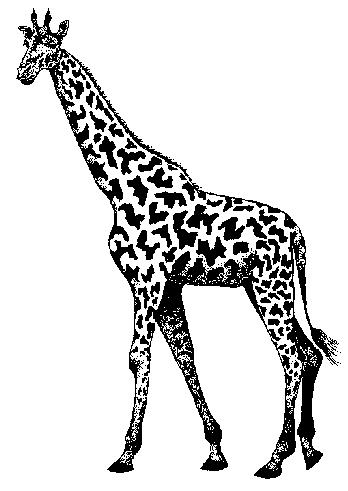 maj07_giraf.png