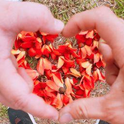 Xing Chen (柴柴喵)